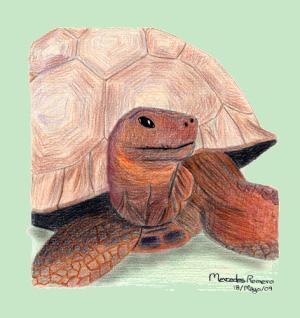Harriet, la tortuga de Darwin
